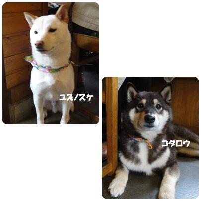 13-3-132.jpg