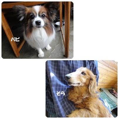 13-4-1.jpg