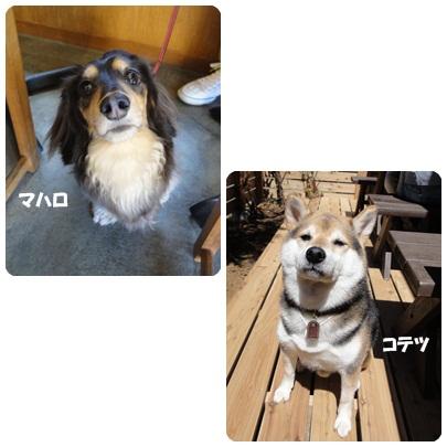 13-4-33.jpg