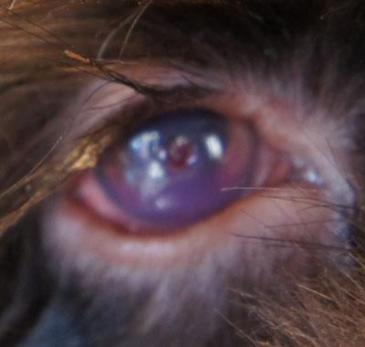 ボンちゃんの目