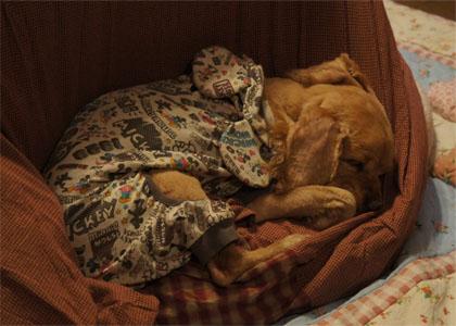 シンさん寝う