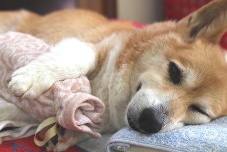 抱き枕~^^