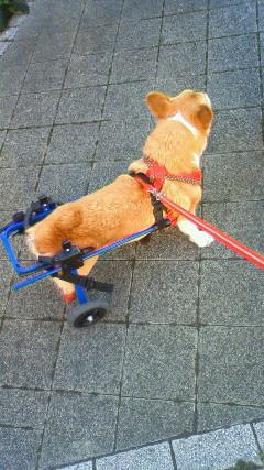 K9製車椅子