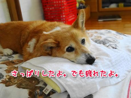 犬のつぶやき