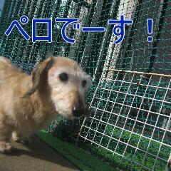 1_20101022152432.jpg