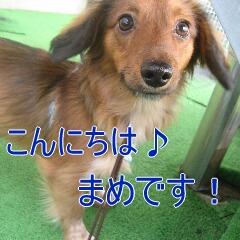 1_20101119161823.jpg