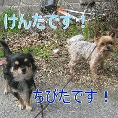 1_20101213164237.jpg