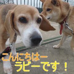 1_20110107150741.jpg