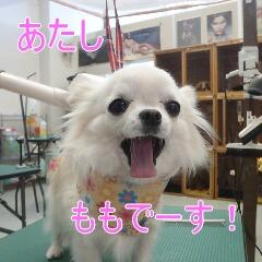 1_20110108153943.jpg
