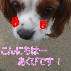 1_20110110171143.jpg
