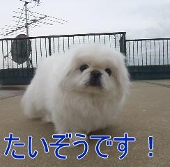 1_20110110171954.jpg