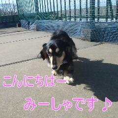 1_20110110172547.jpg