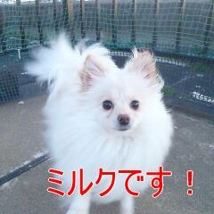 1_20110110172939.jpg