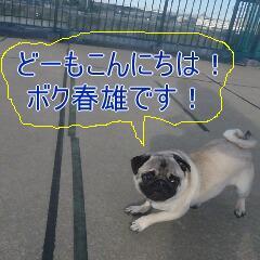 1_20110113192647.jpg