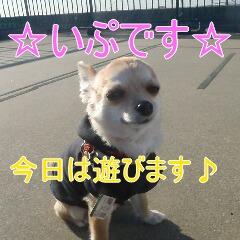 1_20110121165045.jpg