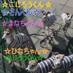 1_20110128111339.jpg