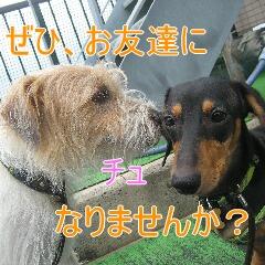 コピー ~ IMG_0498