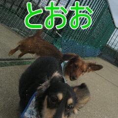 IMG_9111あ