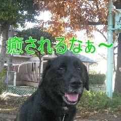IMG_9507s