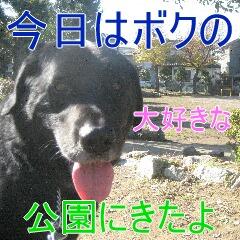 IMG_9515 あ
