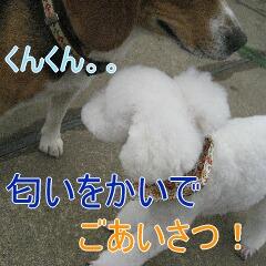 2_20100217164440.jpg