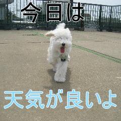 2_20100709133136.jpg