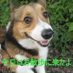 2_20100710192218.jpg