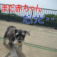 2_20100710192458.jpg