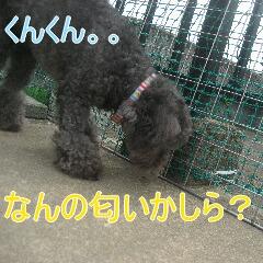 2_20100714151852.jpg