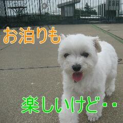 2_20100716154855.jpg