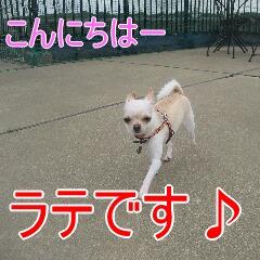 2_20100716155723.jpg