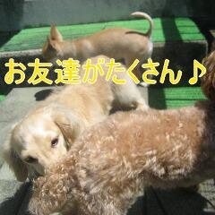 2_20100727120757.jpg