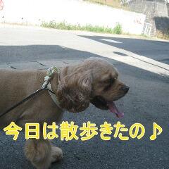 2_20100905164237.jpg