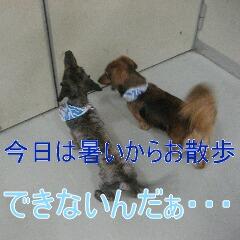 2_20100905170520.jpg