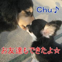 2_20100905172536.jpg
