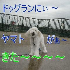 2_20101002195226.jpg