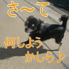 2_20101002195548.jpg