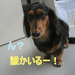 2_20101022151920.jpg