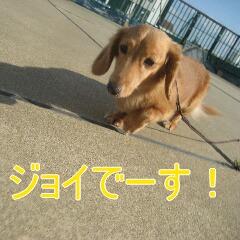 2_20101022152432.jpg