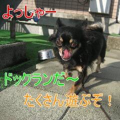 2_20101104152119.jpg