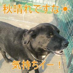 2_20101108190412.jpg