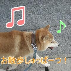 2_20101109162058.jpg