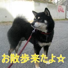 2_20101113161349.jpg