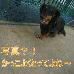 2_20101117160150.jpg