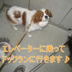 2_20101119161544.jpg