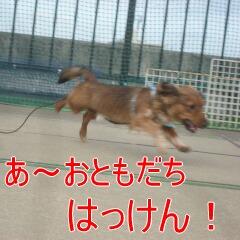 2_20101119161823.jpg