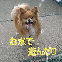 2_20101119162614.jpg