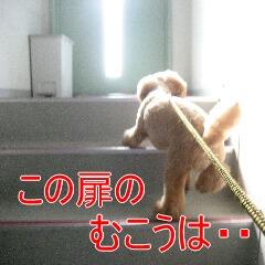 2_20101125163340.jpg
