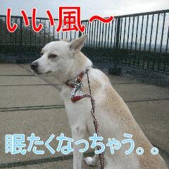 2_20101130132638.jpg