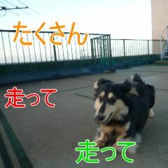 2_20101214164638.jpg